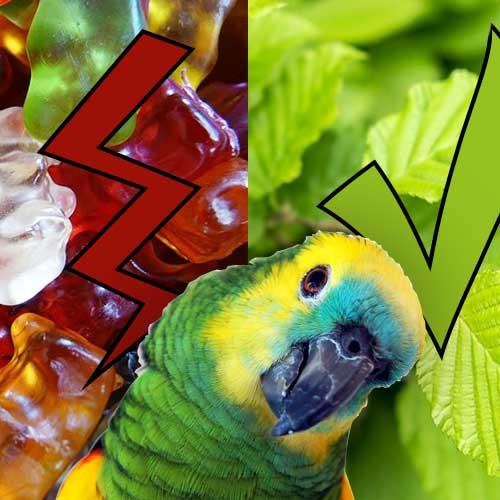 Papagei Amazone Verboten Dinge Giftige Dinge erlaubte Dinge Liveparrot