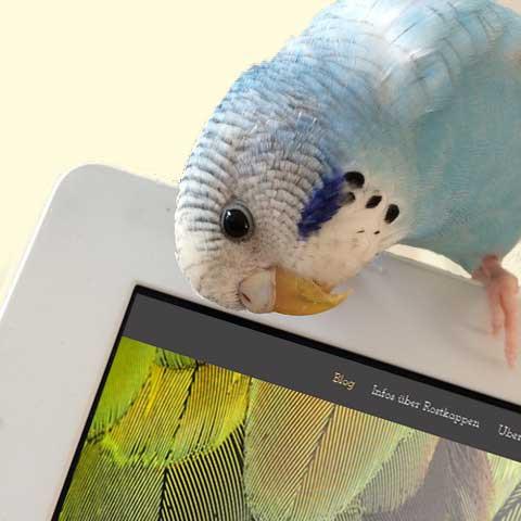 Rostkappenpapagei DIY Spielzeug Papagei Liveparrot