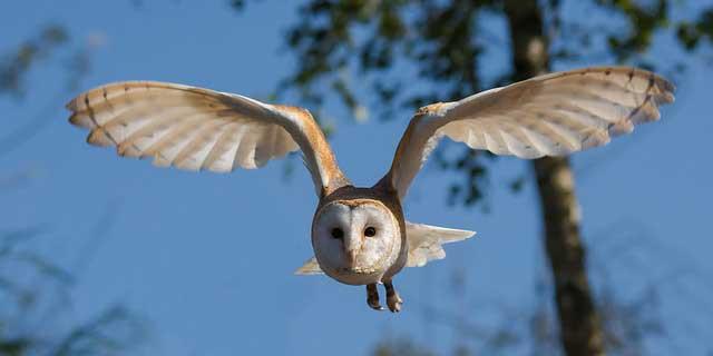 Flügel Vogel Knochen Fliegen Papagei Blog Rostkappenpapagei Liveparrot