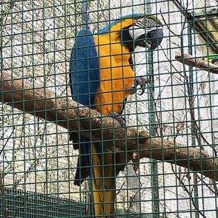 Im Vogelpark Olching
