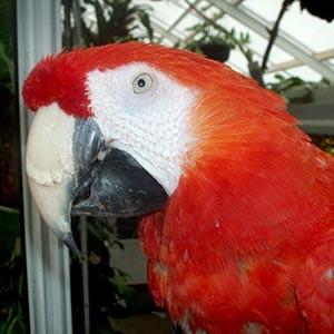 Papagei aus Pippi Langstrumpf: Rettung vor der Todesspritze?