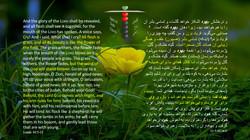 Isaiah_40_5_11