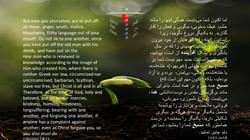 Colossians_3_8_13