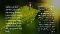 Psalms_30_8_12