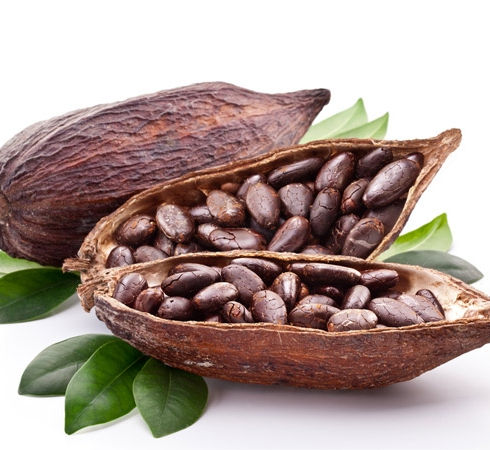 Ziarno kakaowca