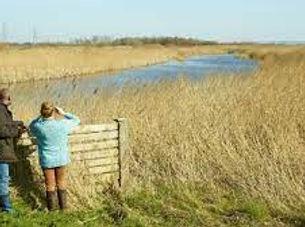 Wetlands Blue.jpg