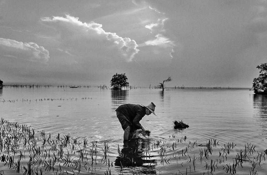 Farmer, Thale Noi, Phatthalung, Thailand