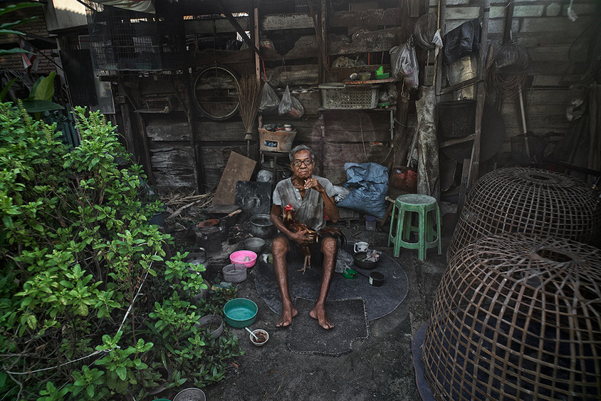 Gamecock farmer, Bangkok