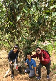 Trekking through the forest to the 800 years old tea tree.  Kanjana, Sutthirot, Daniel