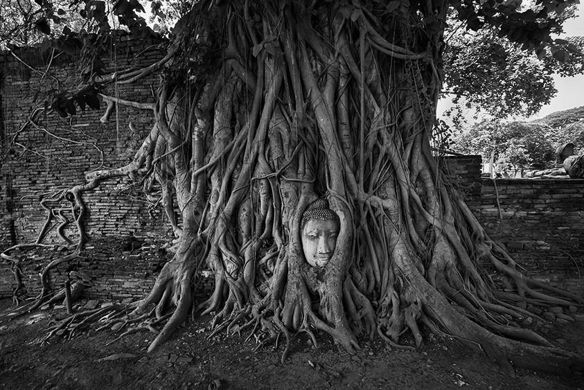 Life in Harmony, Ayutthaya