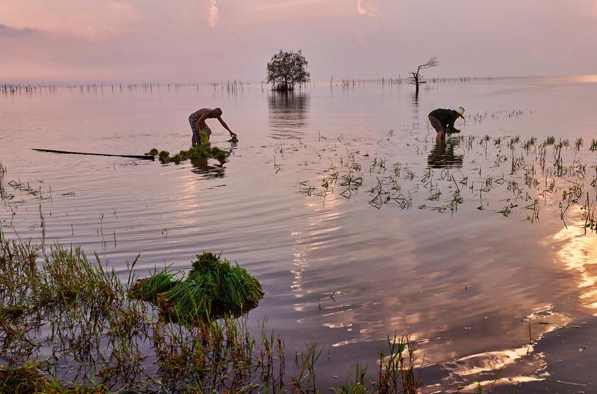 Farmers, Thale Noi, Phatthalung, Thailand