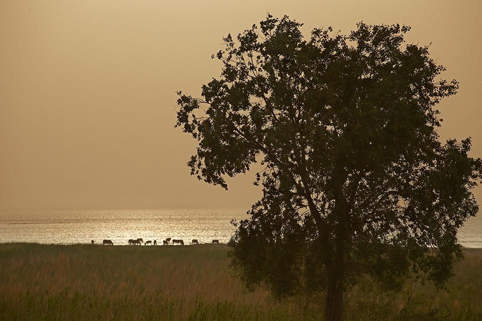 Horses by Kanas Lake