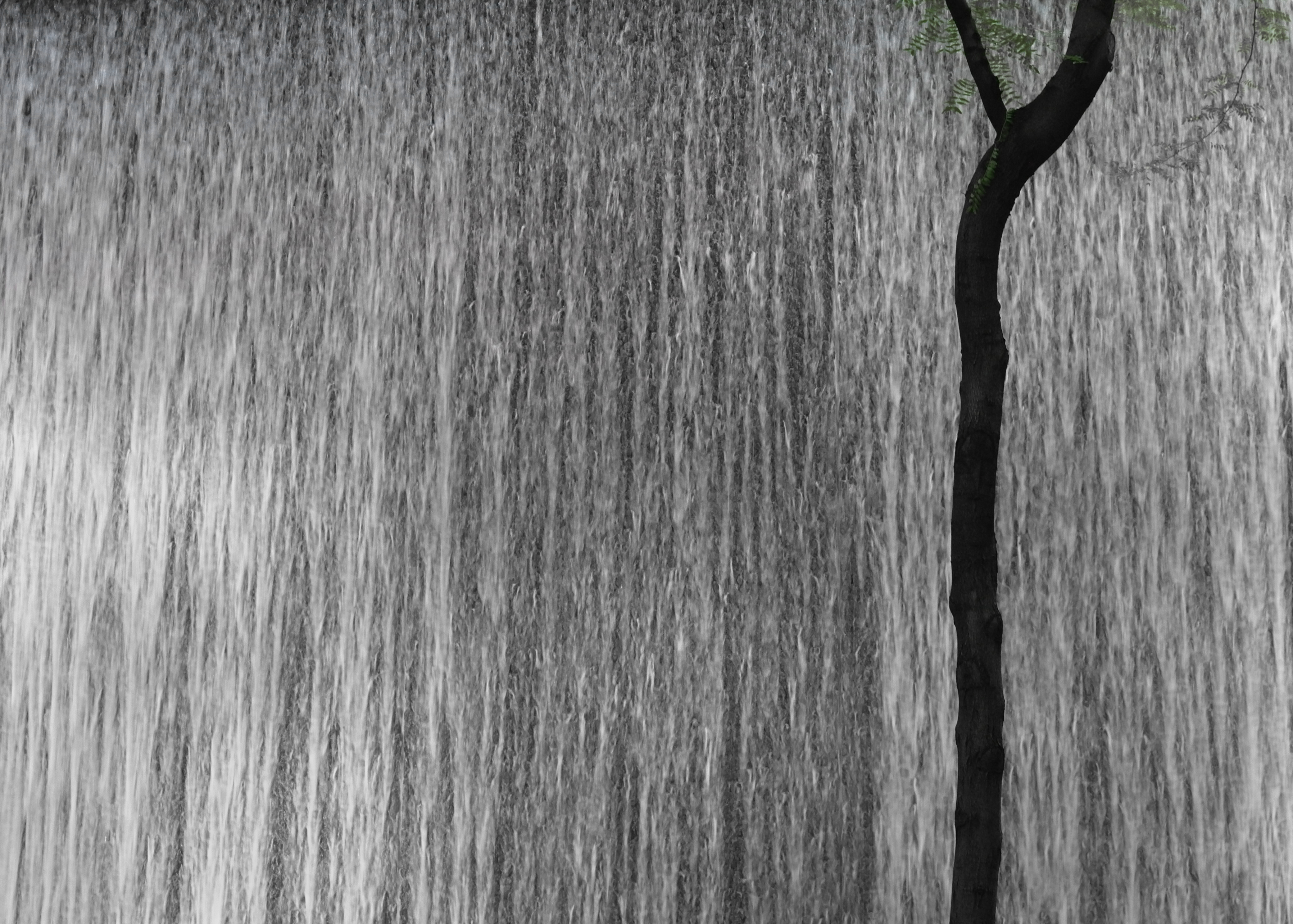 Hydro alone tree.jpg