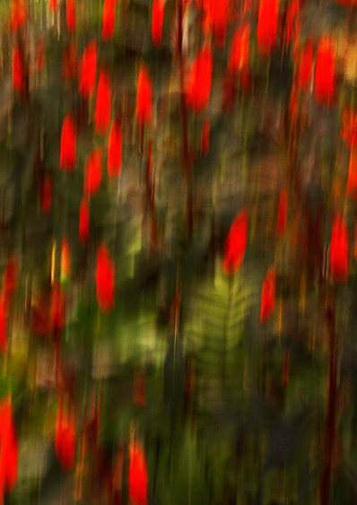 Movement of colors No. 733