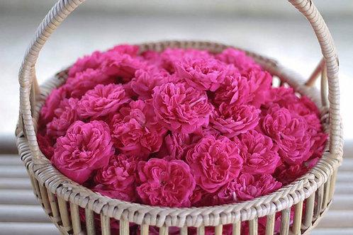 Organic Rose Tea-whole and Petal