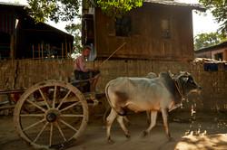 Kanjana-Chaiwatanachai-Image-Works_Mandalay_2014.01.19_0362w.jpg