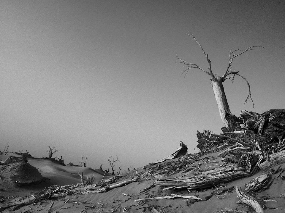 Perseverance of polar trees, Ejina Qi, Inner Mongolia