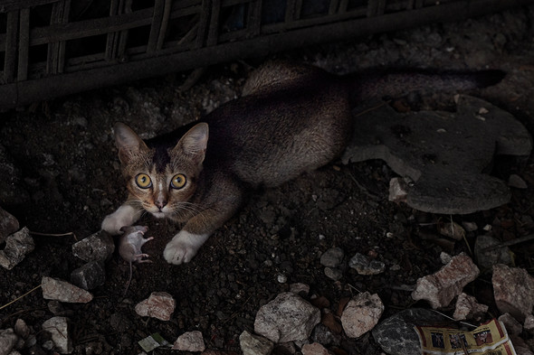 Cat and mouse, Ohae Phoe Village, Mandalay