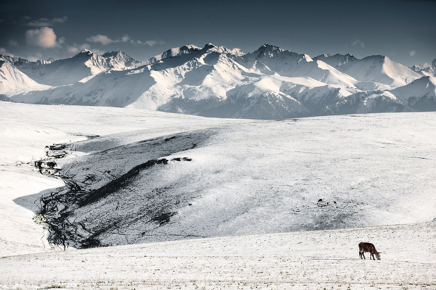 Snow capped Kalajun Grassland