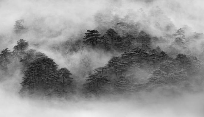 Ink China - Huangshan