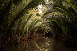 palm tunnel_s