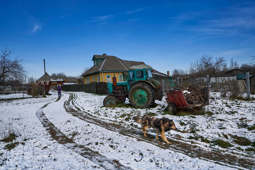 Village dog, Vereteyskoye
