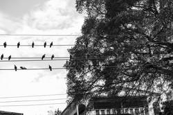 bird-lines_s.jpg
