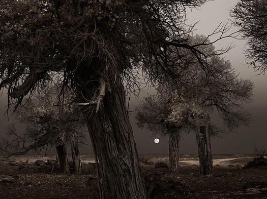 Full Moon, Ejina Qi