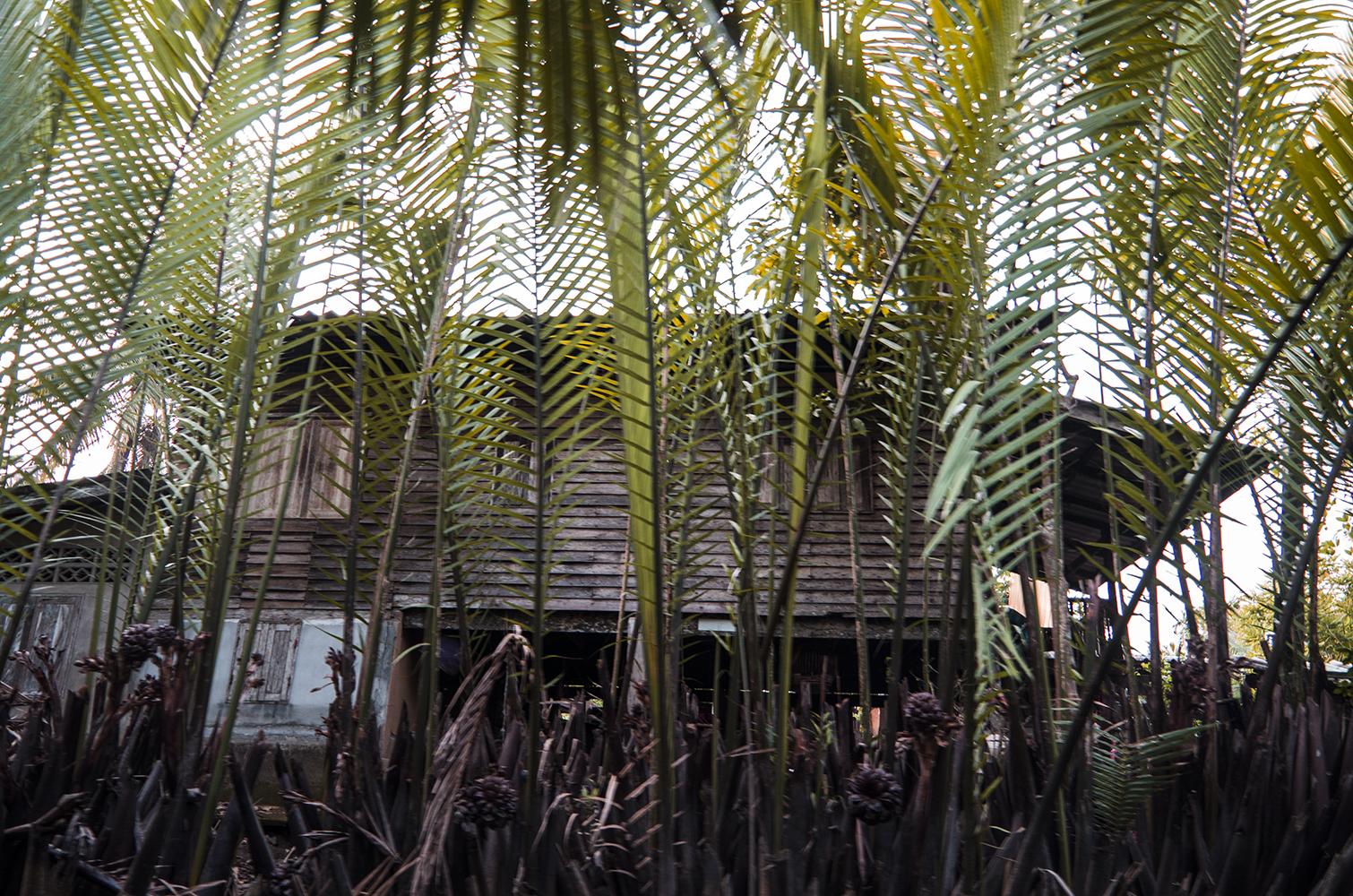 palm rhythm02_s