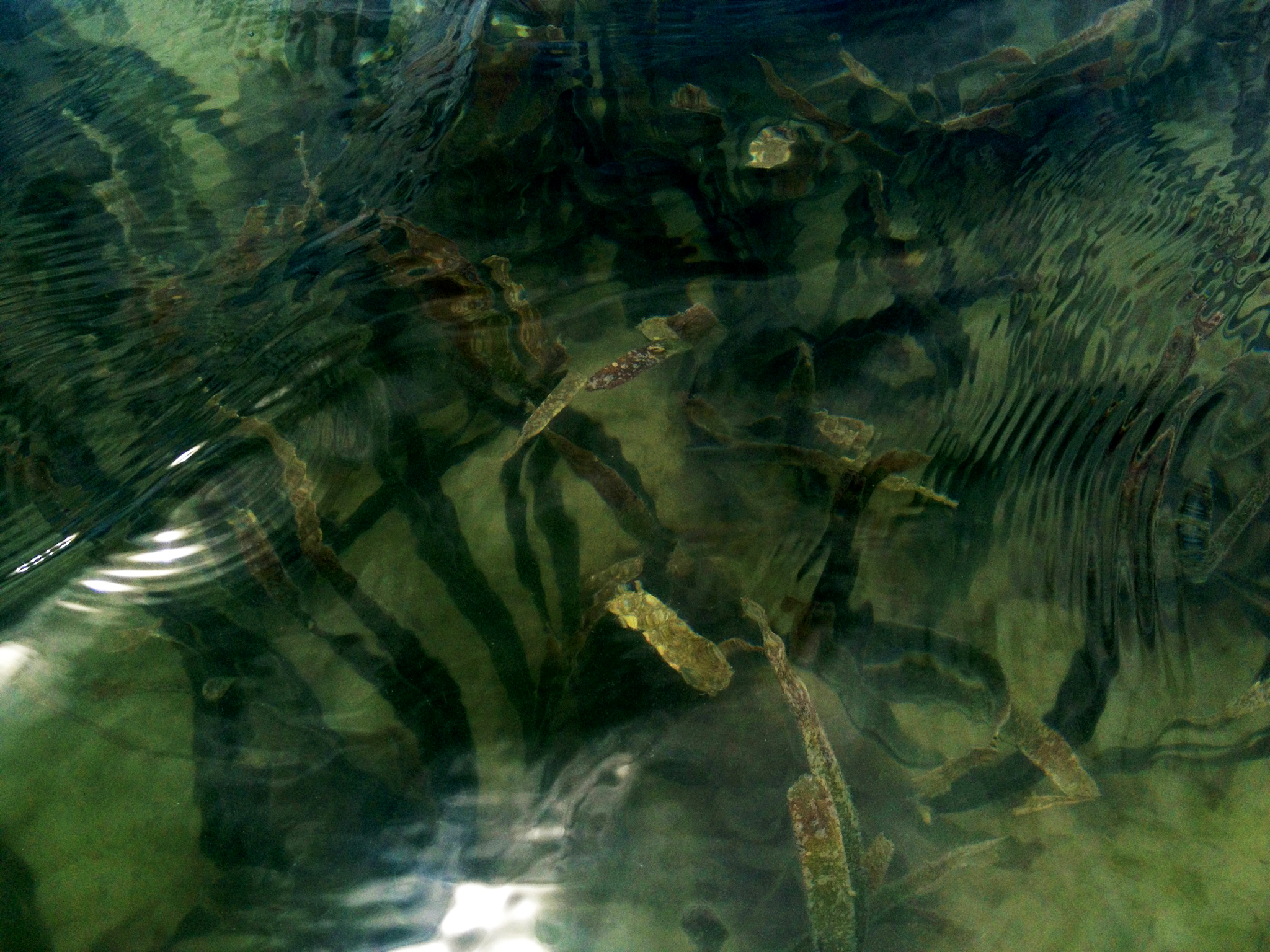 Hydro-ocean2.jpg