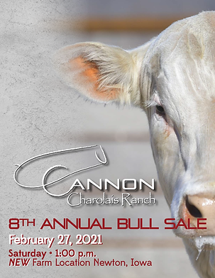 2021 Cannon Charolais Bull Sale