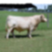 Southern Ledger 38028