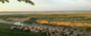 sortie nature baie de somme visite guidée traversée avec guide saint valery le crotoy transbaie activité sortie originale insolite picardie