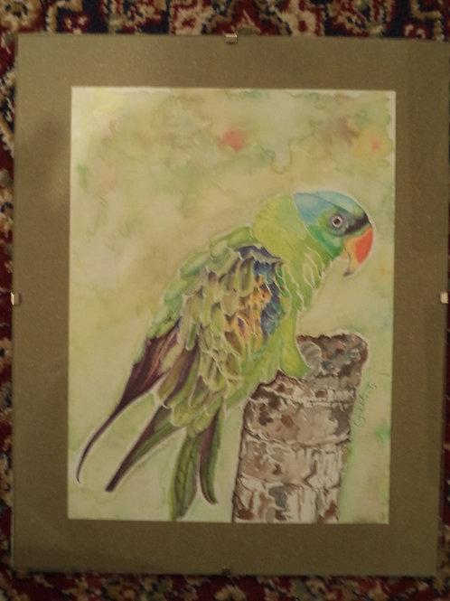 """""""A Blue-Naped Parrot"""""""