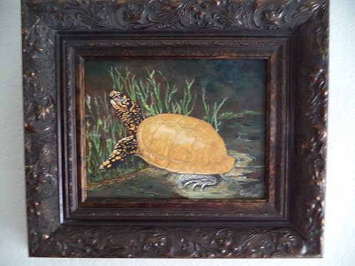 """""""The Turtle With The Golden Shell"""""""