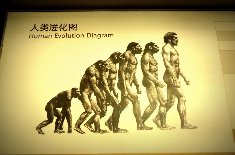 Human Evolution Diagram (Public Domain) Astrology blog William Lamont astrologer Australia