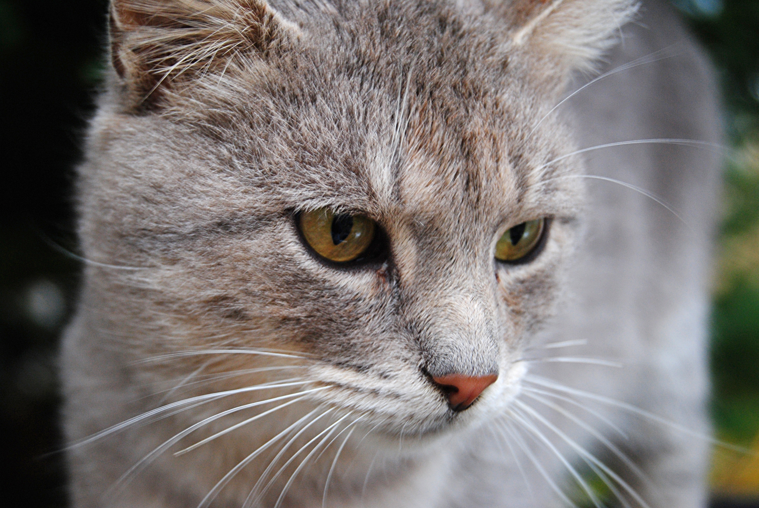 cat_col (1)