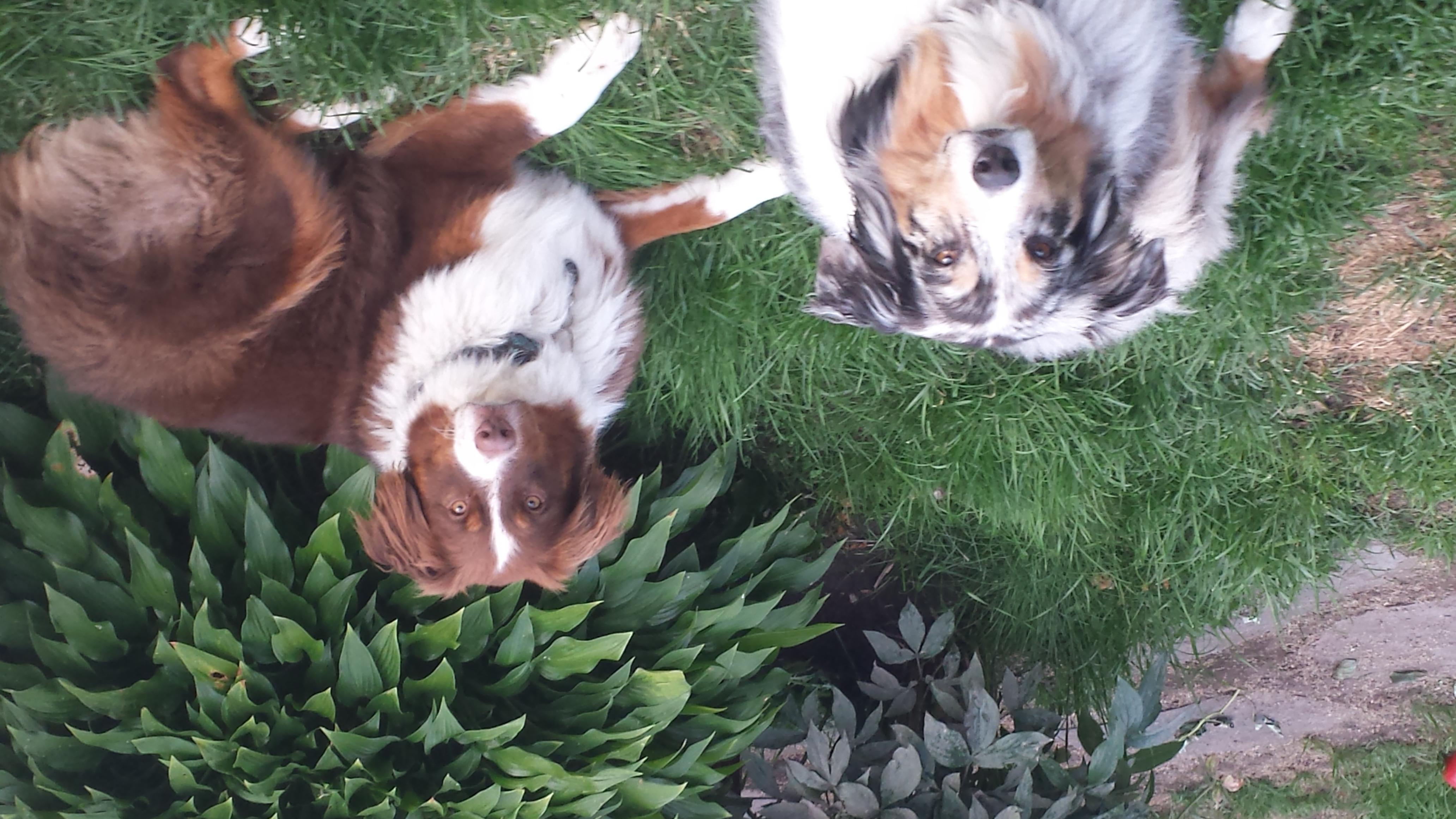 Stella and Wison (c).jpg
