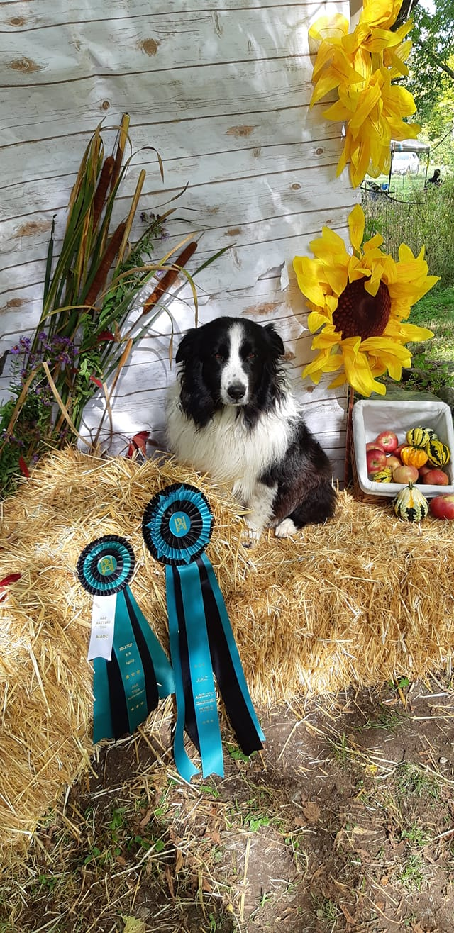 AGILITY TRIAL CHAMPION ATCh
