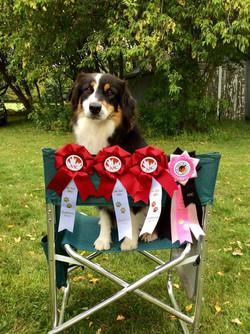 AGILITY DOG of CANADA Title