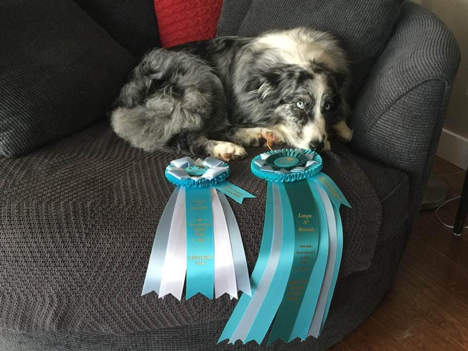 ATCH Champion