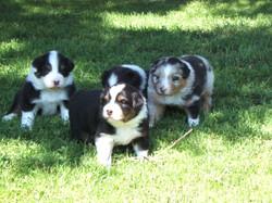 3 wks puppypiks6 017.jpg