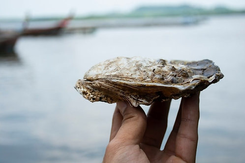 Gillardeau oesters