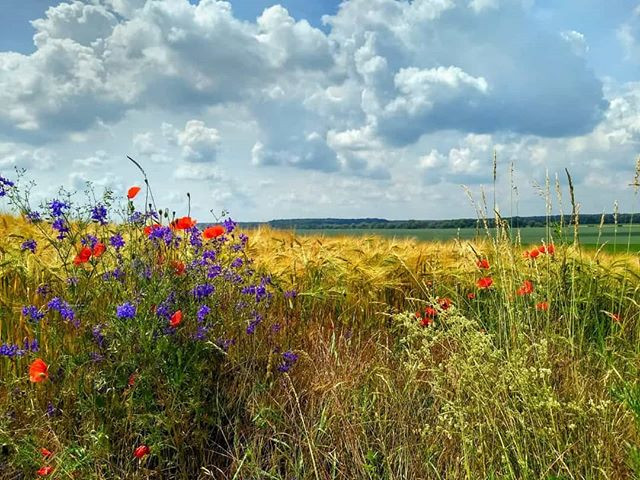 Summer fields with colourful flowers #su