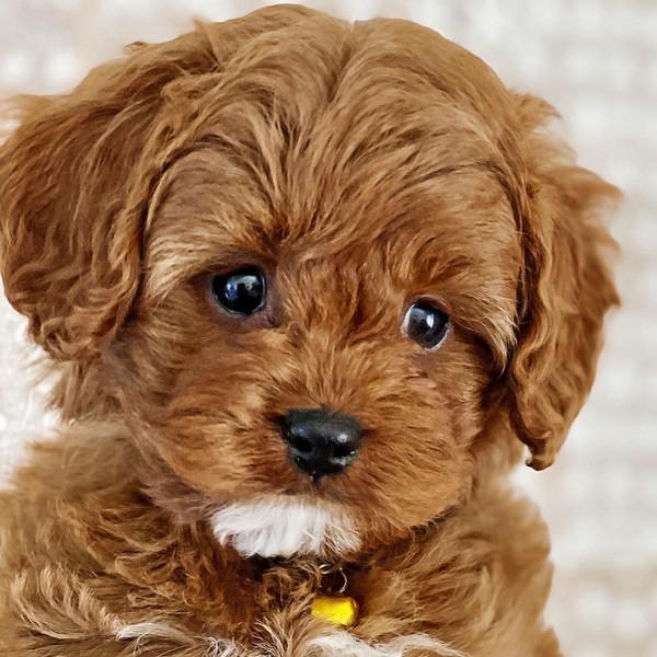 Previous Puppies
