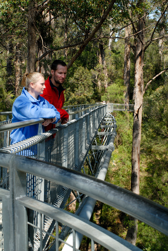 Tree Top Walk in the tingle canopy