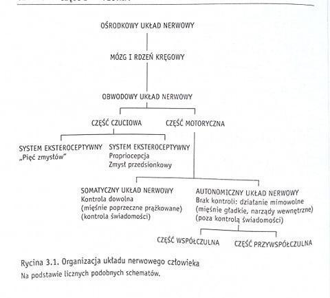 Organizacja układu nerwowego