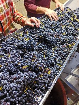 urban_winemaking.jpg