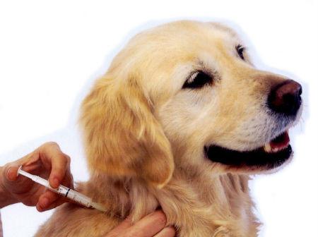 vacunacion-de-perro.jpg