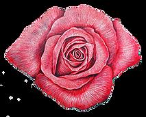 rosa-rosa.png